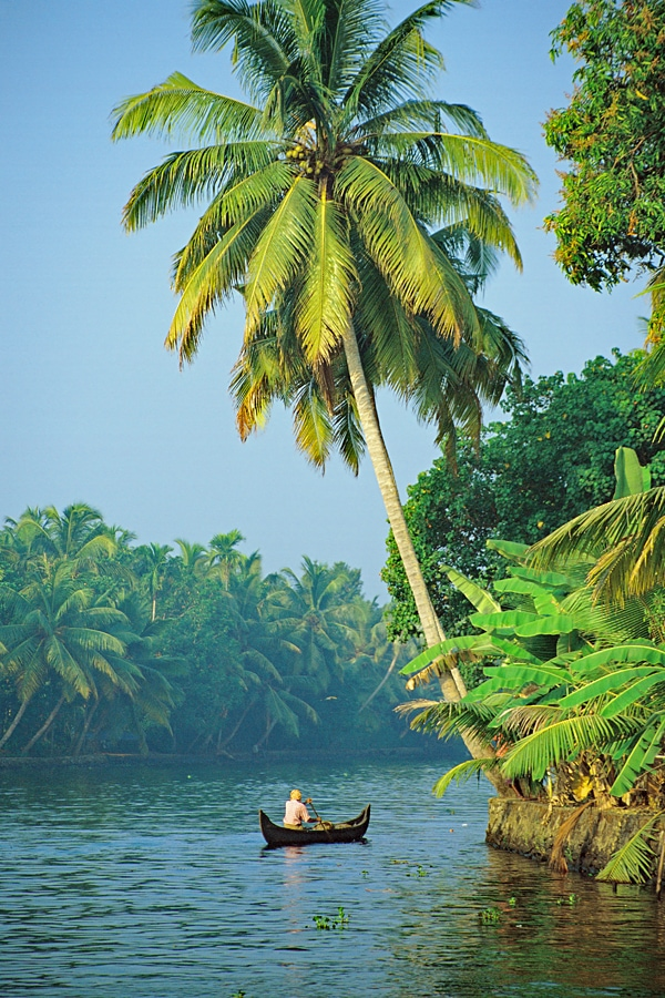 Drifting along the backwaters on a Kerala tour #Backwaters #Kerala #India #palmtree #river