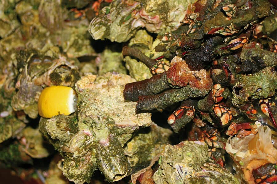 Weird food | Barnacles and sea fingers in Cape Verde