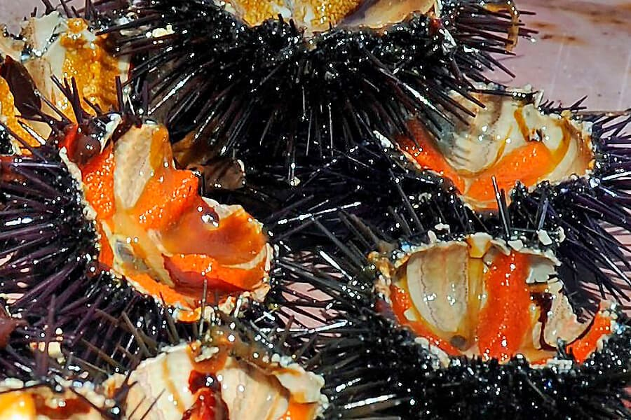 Weird food around the world | Sea urchins in Puglia, Italy