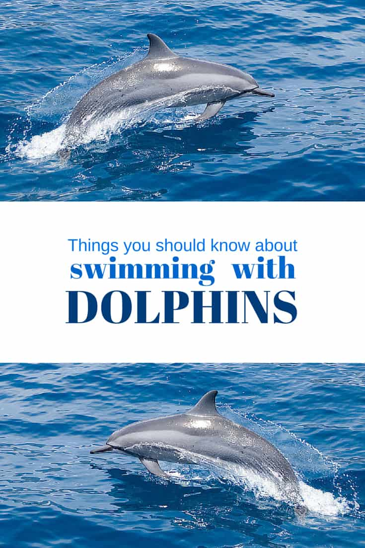 Things you should know about swimming with dolphins