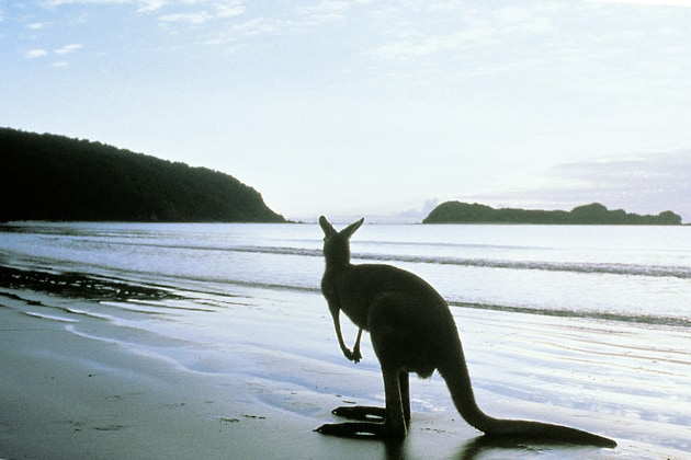 Kangaroo Island, top 5 things to do in Australia