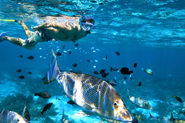 Coral Bay, Ningaloo Marine Park, top 5 things to do in Australia