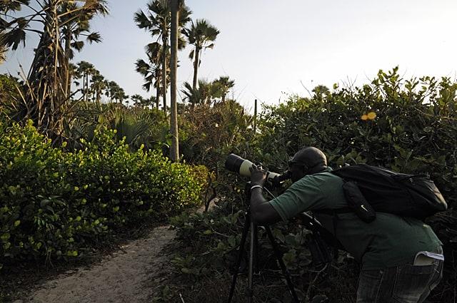 Malick Suso, best bird guide Gambia