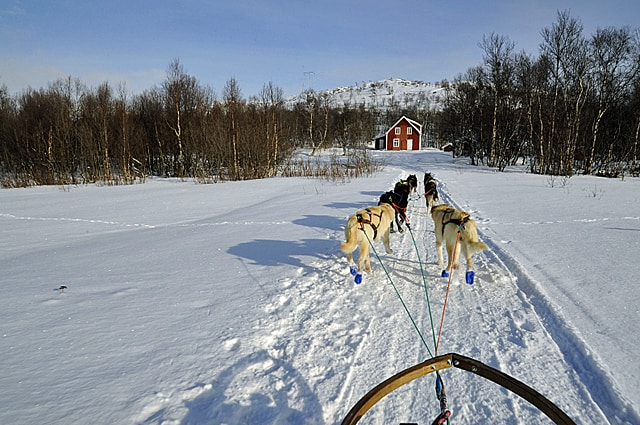 husky dog sleigh, Kirkenes, Norway