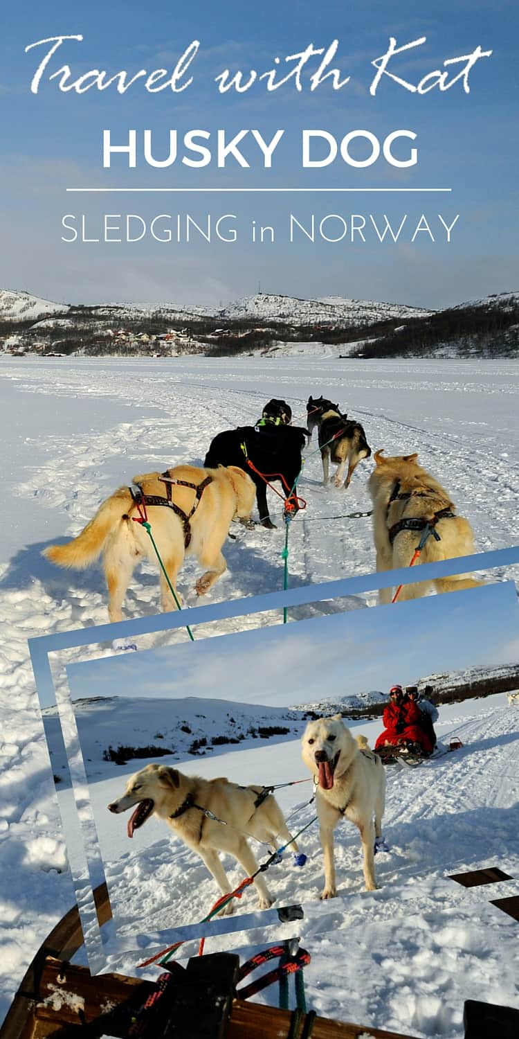 Husky Dog Sledging in Arctic Norway