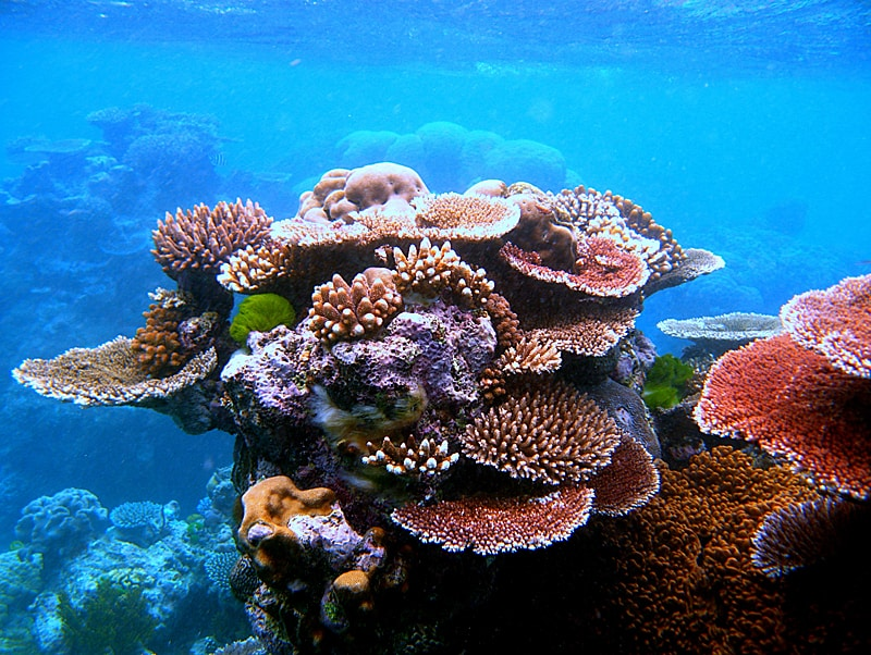 A healthy coral reef by Toby Hudson via Wikimedia Commons
