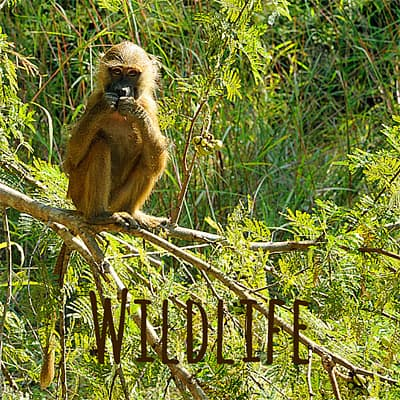 Wildlife travel blogS