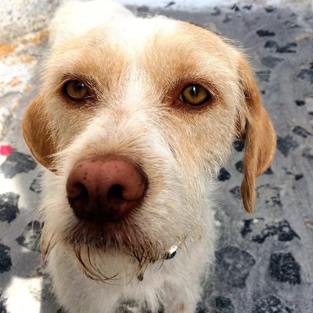 Say cheese #Pyrgos Santorini #Greece #dogs