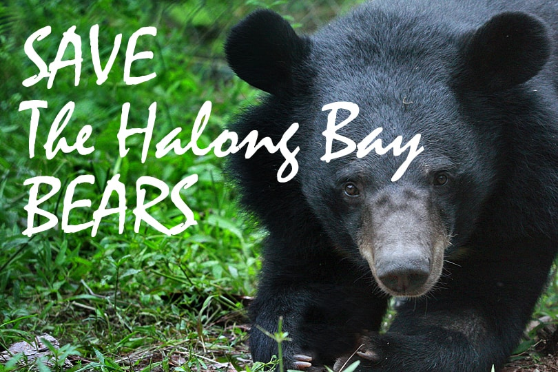 Save the Halong Bay Moon Bears