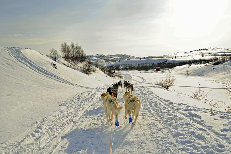 Huskies running through the snow in Arctic Norway