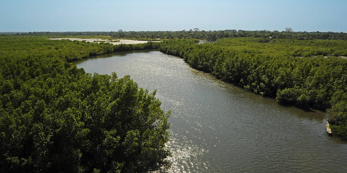 The Mangrove Creeks of The Gambia, West Africa
