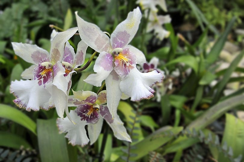 Orchids, Kew Gardens, London