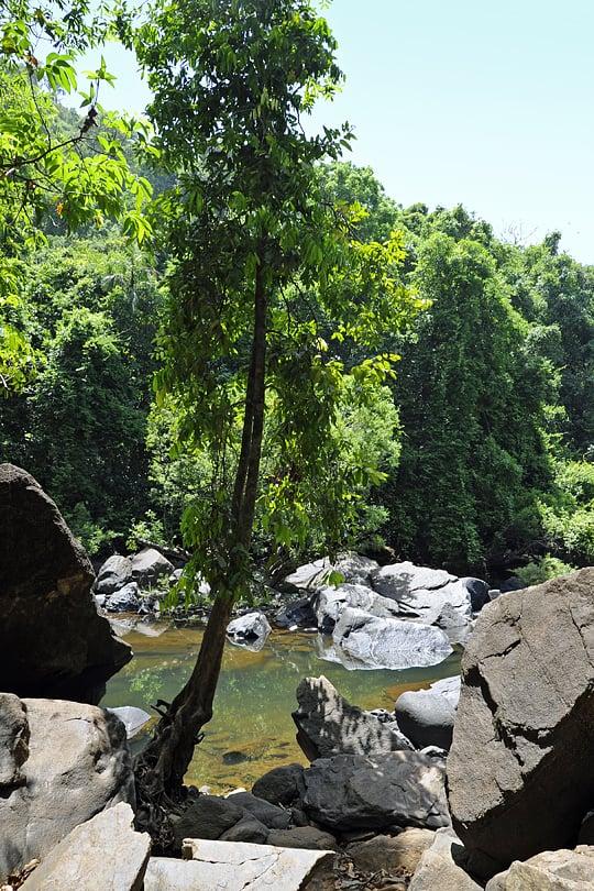 Bhagwan Mahavir Wildlife Sanctuary, Goa