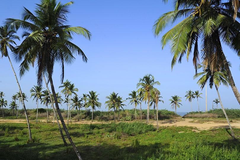 view from Acacia Palms Restort, Colva, Goa, India