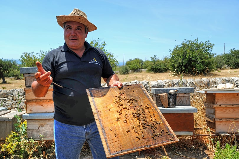 Bee keeper in SE of Sicily