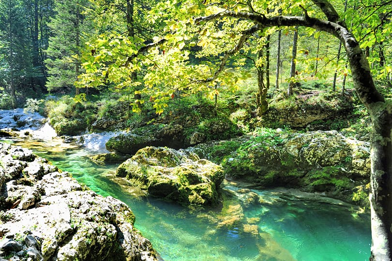 The Lakes, Mountains and Forests of Slovenia