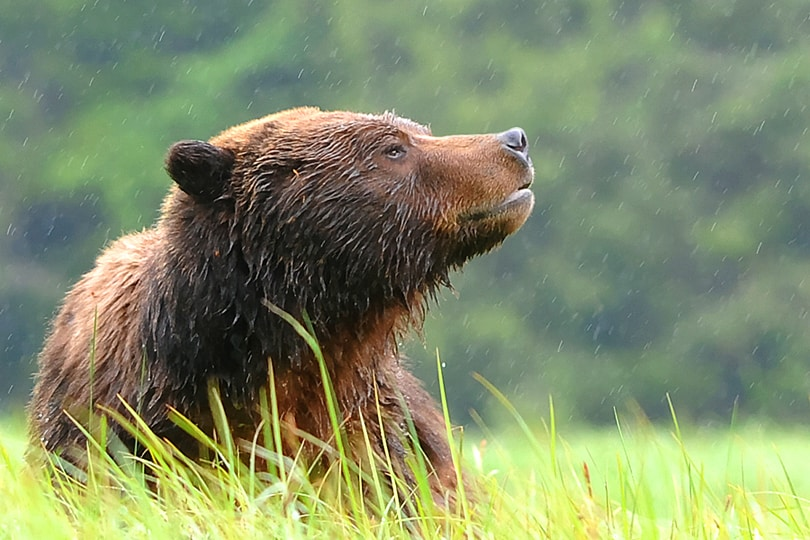 Wildlife Photography in the Great Bear Rainforest – Top 12 Tips