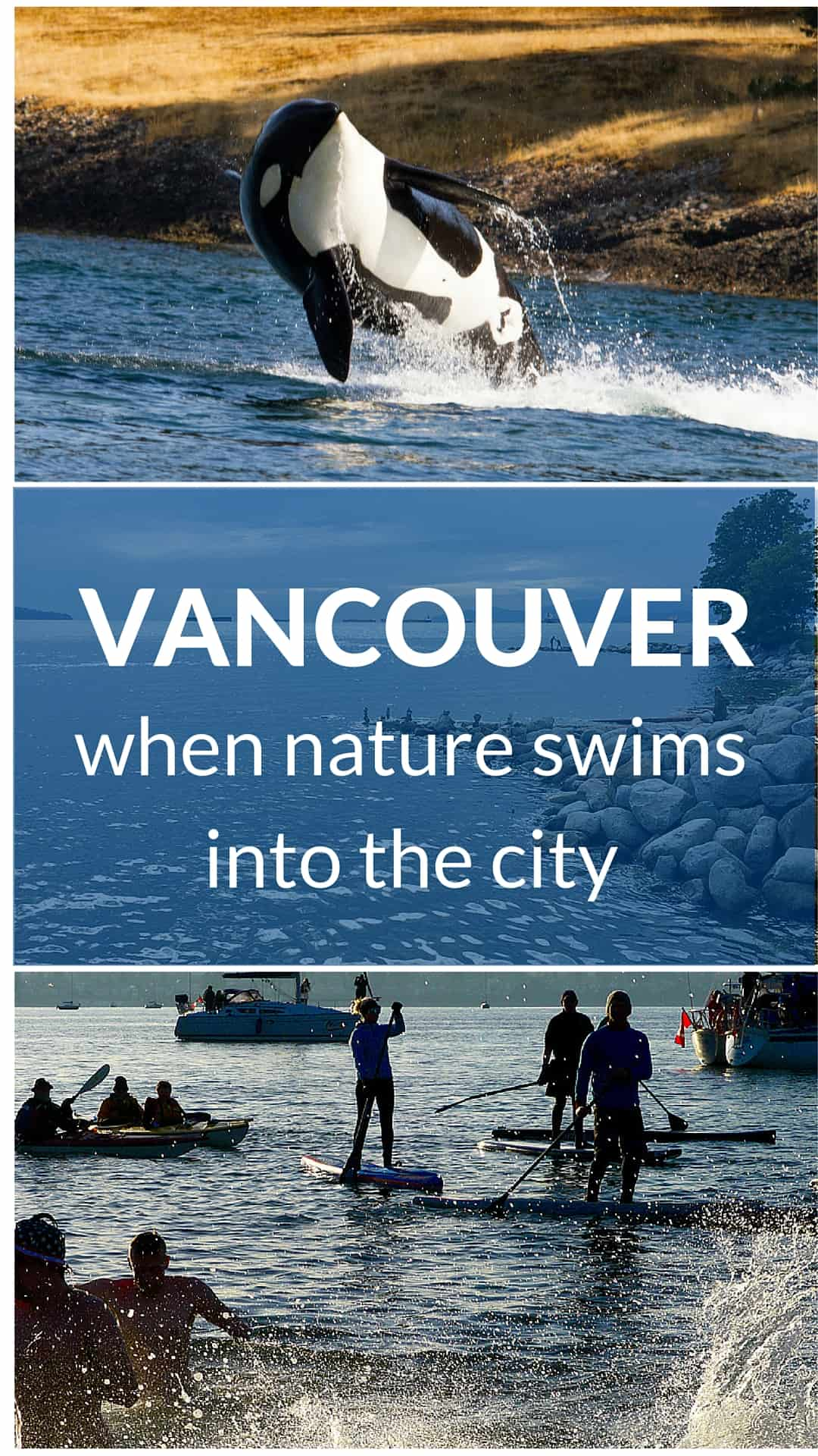 Vancouver - when nature swims into the city. Orca by Shawn McCready, https://www.flickr.com/photos/shawnmccready/
