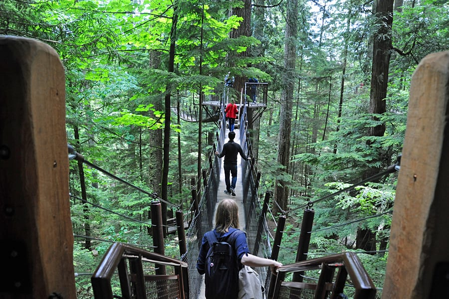 Forest Walk at Capilano Suspension Bridge Park, Vancouver, British Columbia, Canada