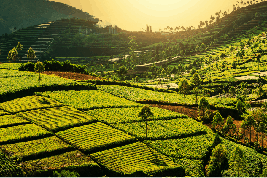 Top 10 reasons to visit Java