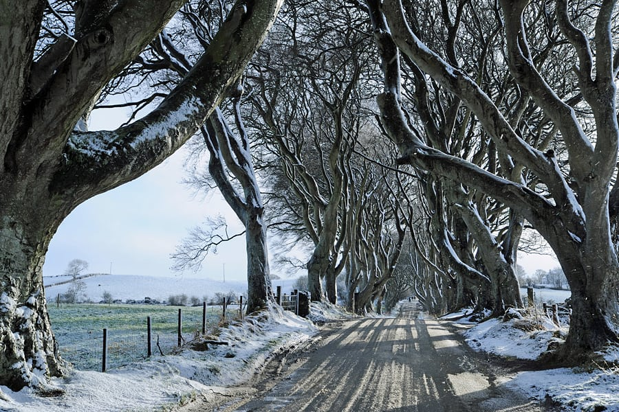 The Dark Hedges aka The Kingsroad in Game of Thrones, Country Antrim, Northern Ireland