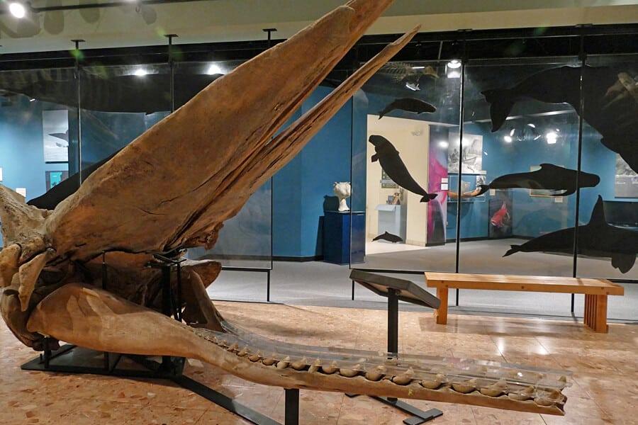 New Brunswick Museum, Saint John, New Brunswick, Canada