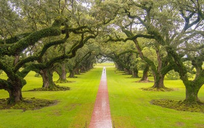 Magnificent trees, avenues and forests around the world
