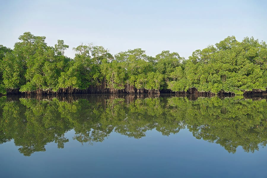Canoeing through the mangroves, Makasutu Forest, The Gambia