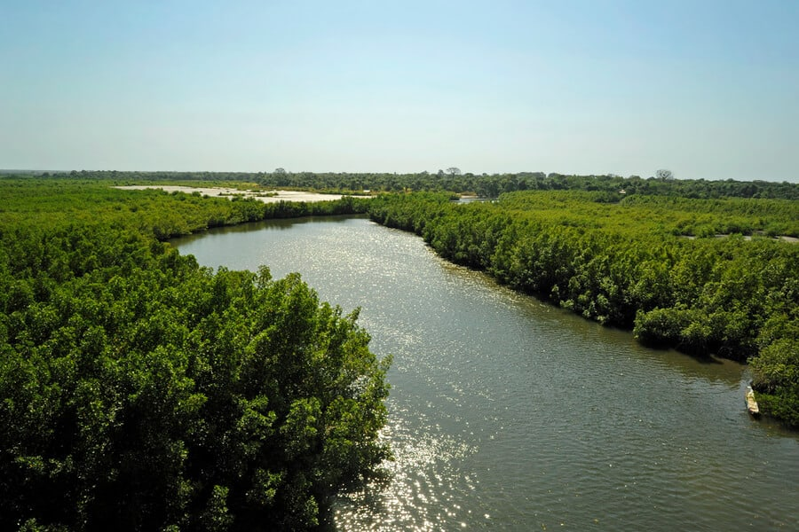 Tributary of The Gambia River