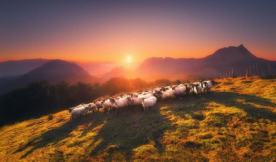 Navarre lamb, Basque Country