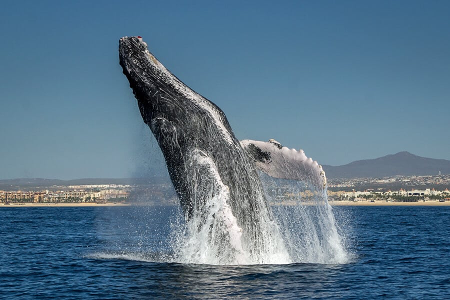 How to become a responsible whale watching guide