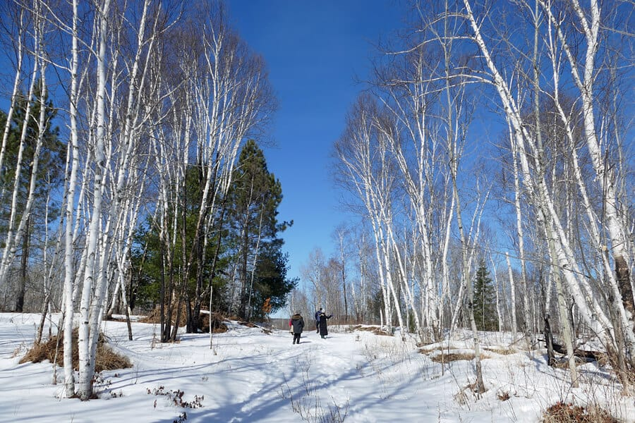 Walks in the wood in Sudbury, Ontario