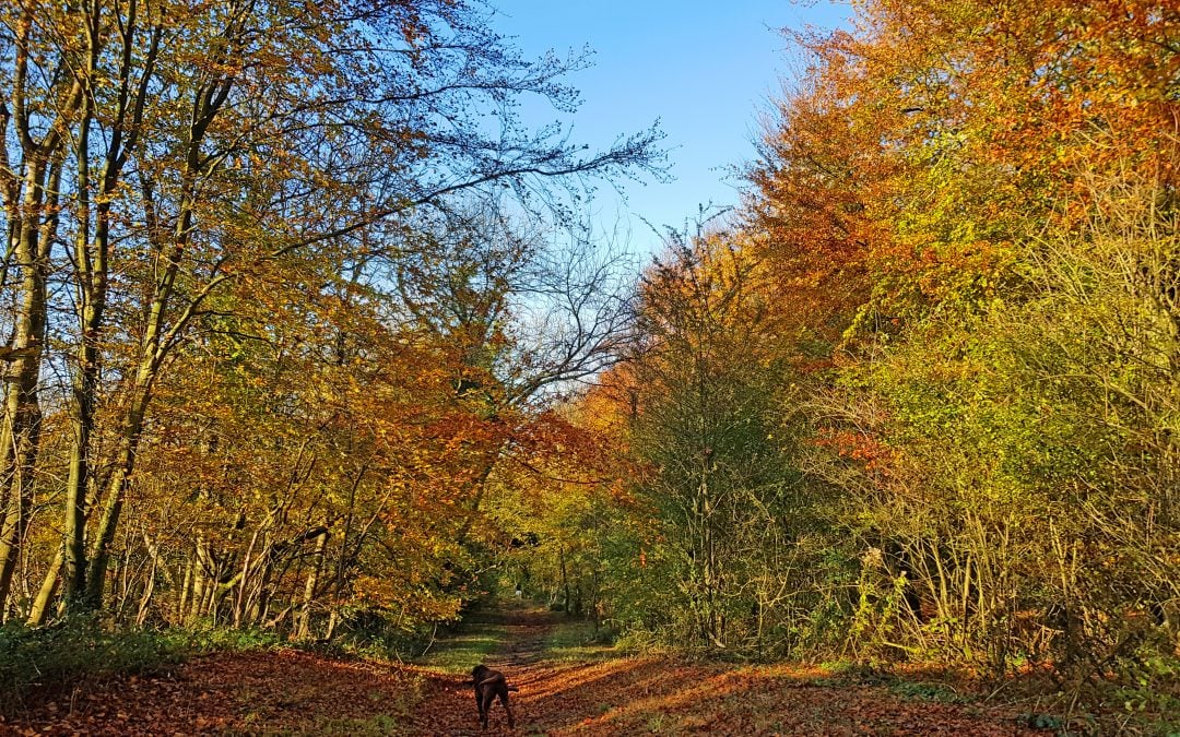 Best places to visit in October in the UK and beyond