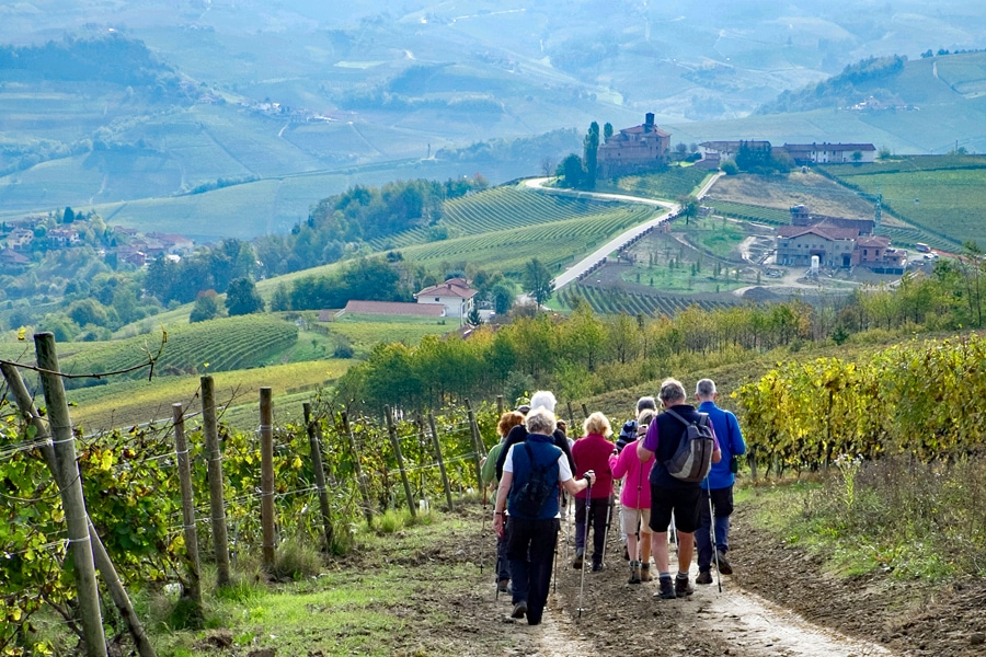 Small group solo holidays - a walking tour through vineyards