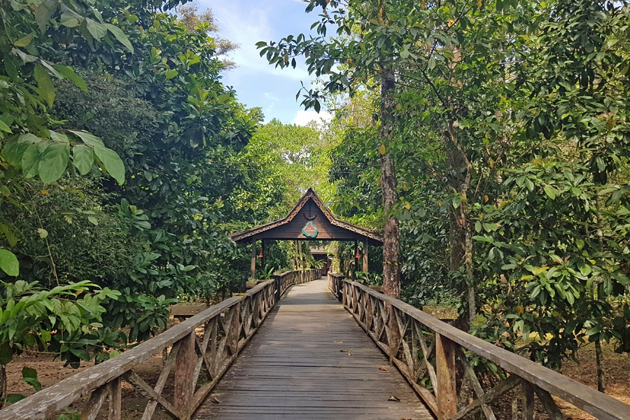 Wood walkways link the different building sof the Sukau Rainforest Lodge through the lush jungle