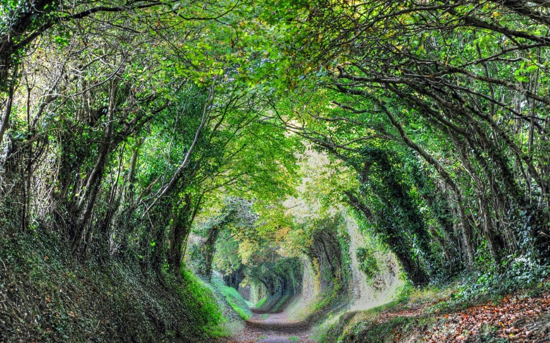 My favourite walks in the South Downs National Park,