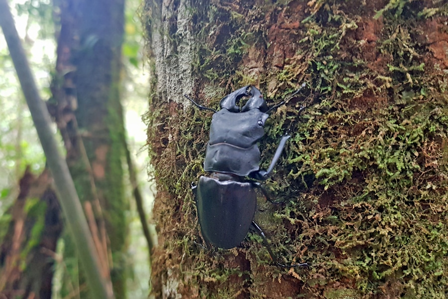 Looking for bugs in Borneo