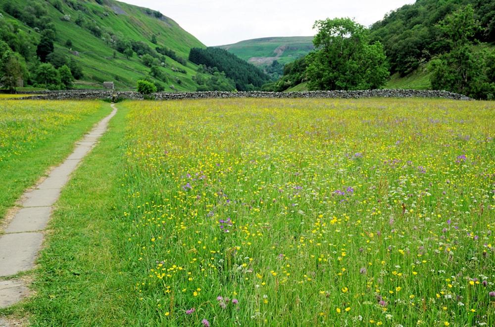 Muker Meadows on eof England's most impressive flower fields