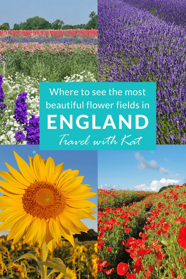 The most beautiful flower fields in England